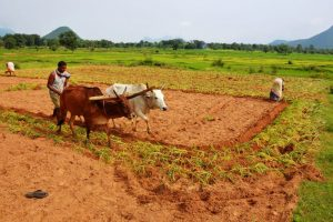 Agro Horticulture